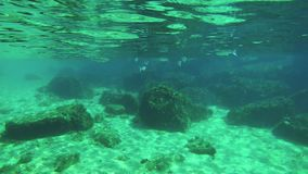 Underwater life with a school of fish in 4k.  stock footage