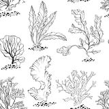 Seaweed. Seamless  pattern with underwater plants. Black and white  illustration. Underwater life. Seamless monochrome background with algae Royalty Free Stock Photography
