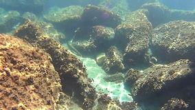 Underwater life. In the spanish coastal stock video footage
