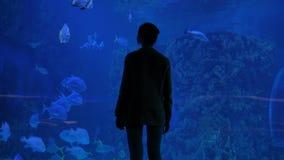 Woman silhouette looking at fish in large public aquarium tank at oceanarium stock video footage