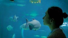 Woman silhouette looking at fish in large public aquarium tank at oceanarium stock footage