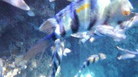 Underwater Life. Tropical Fishes on a coral reef hd video stock video footage
