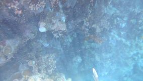 Underwater Life. Tropical Fishes on a coral reef hd video stock video
