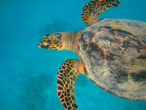 Underwater life of tropical sea Stock Photography