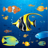 Underwater Life Vector Stock Photos