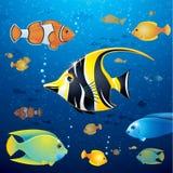 Underwater Life Vector Stock Photos