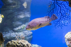 Underwater life. Where the fish of the sea are observed stock photography