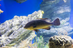 Underwater life. Where the fish of the sea are observed royalty free stock image