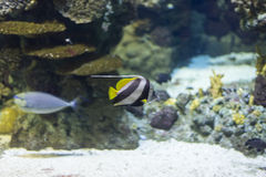 Underwater life Royalty Free Stock Photography