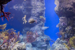 Underwater life Stock Photos