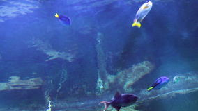 Underwater light rays in the aquarium. With fish stock footage