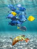 Underwater lights and colorful fish Stock Photo