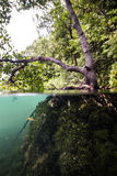 Underwater mangrove in Kakaban, Derawan, Kalimantan, Indonesia Royalty Free Stock Photo