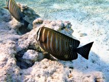 Underwater, Marine Biology, Water, Organism royalty free stock images