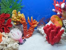 Underwater Marine Colorful Stones, Color Coral Diversity, Stock Images