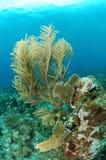 Underwater marine life Stock Image