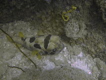Underwater marine life. Marine life at the bottom of the ocean Stock Photo