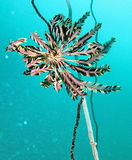 Underwater marine life Stock Images