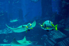 Underwater marine life in the huge aquarium Stock Photo