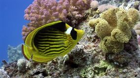 Underwater marine nature on background of beautiful lagoon of Red sea. Relax video stock video