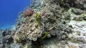 Underwater marine nature on background of beautiful lagoon of Red sea. Relax video stock footage