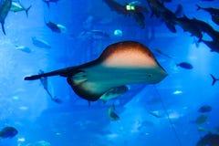 Underwater mit Fischen Lizenzfreies Stockfoto