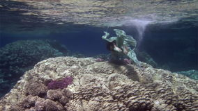Underwater model free diver in fairy costume on background of corals in Red Sea. stock video