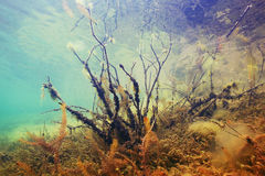 Underwater in  mountain river Royalty Free Stock Photo