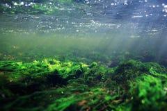 Underwater in  mountain river Stock Photo