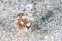 Underwater Muito-manchado juvenil de Sweetlips Fotografia de Stock Royalty Free