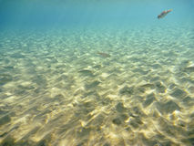 Underwater nell'egeo Immagine Stock