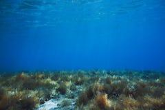 Underwater no mar Imagens de Stock Royalty Free