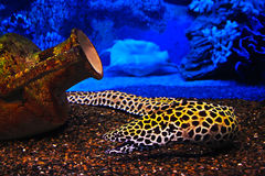 Underwater objects: fish, jug, shell Royalty Free Stock Images