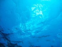 Underwater Ocean Background Stock Image