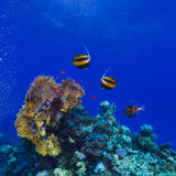 Underwater ocean coral garden full of colorful sealife. Underwater deep blue sea coral garden with banerfish and many other kinds of fihsh stock images
