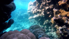Underwater, Ocean,  The corals and fish. stock footage