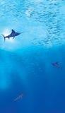Underwater Ocean Scene. Light rays illuminating fish feeding underwater Royalty Free Stock Photos