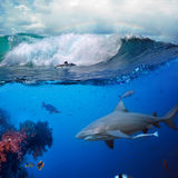 Underwater ocean story with surfer and shark. Image about the ocean and surfer on the breaking wave cloudy sky over him and big dangerous angry hungry shark royalty free stock images