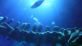 Underwater Ocean View with Whale Bones stock video