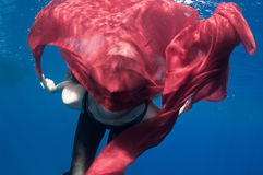 Underwater overindulgence Stock Photography