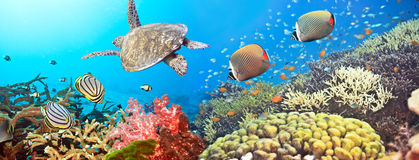Underwater panorama. With turtle, coral reef and fishes