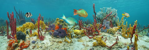 Underwater panorama colorful marine life Royalty Free Stock Photos