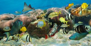 Underwater panorama in a coral reef with fish Royalty Free Stock Images