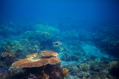 Underwater panorama of coral reef. Undersea landscape photo. Fauna and flora of tropical shore. Coral reef underwater photo. Snorkeling in tropics. Exotic Stock Photography
