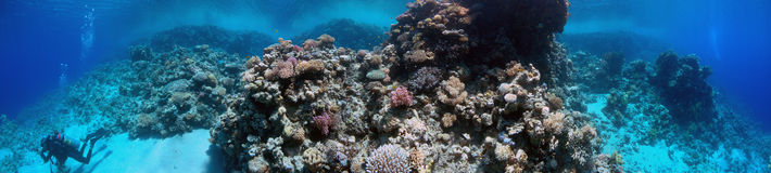 Underwater Panorama. A underwater panorama image that shows a tropical reef and a diver while exploring it Stock Photography