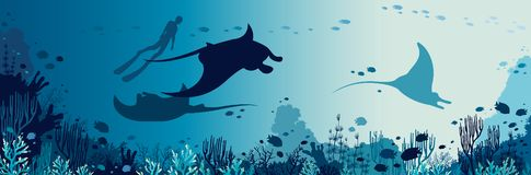 Underwater panorama - mantas, freediver, coral reef, fish, sea. Silhouette of freediver and three mantas swimming near the coral reef and fishes. Underwater vector illustration