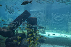 Underwater panorama Stock Images