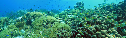 Underwater panoramic. Of reef on the island of bonaire Stock Images