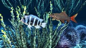Underwater paradise Stock Photography