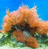 Underwater paradise Royalty Free Stock Image